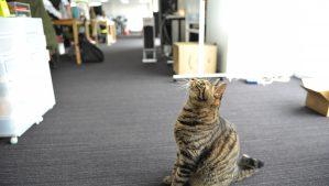 【みんなのマーケット】猫といるオフィス